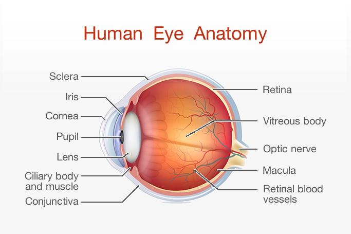 Rutnin Gimbel Lasik Centre Pioneer In Laser Eye Surgery